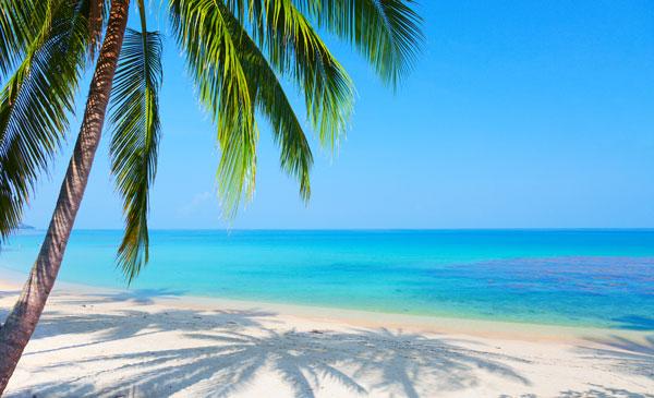 Miami Cruise Guide